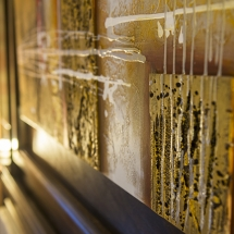 GoldenSpirit-Room34-4
